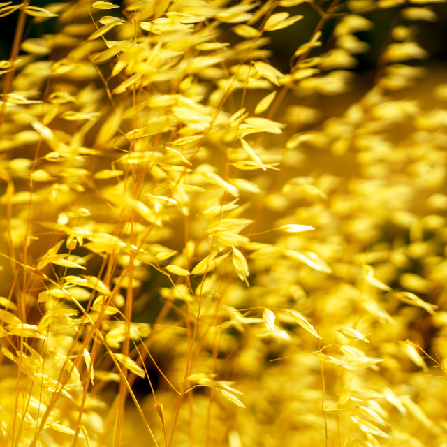 """""""Swaying in the summer wind 3"""" stock image"""