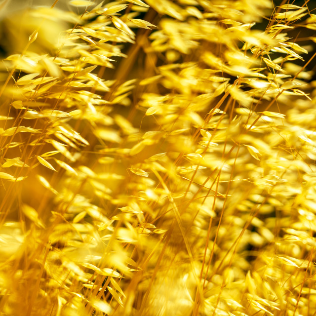 """""""Swaying in the summer wind 2"""" stock image"""