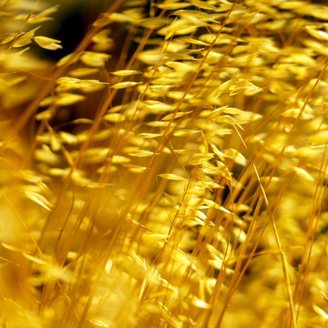 """""""Swaying in the summer wind 1"""" stock image"""