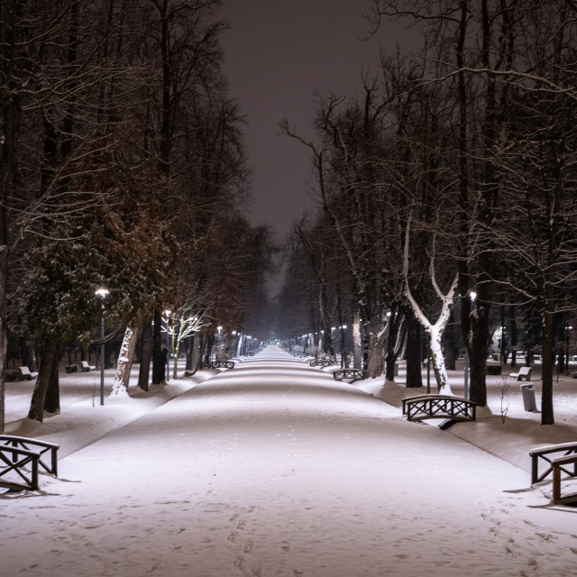 """""""Silence in park"""" stock image"""
