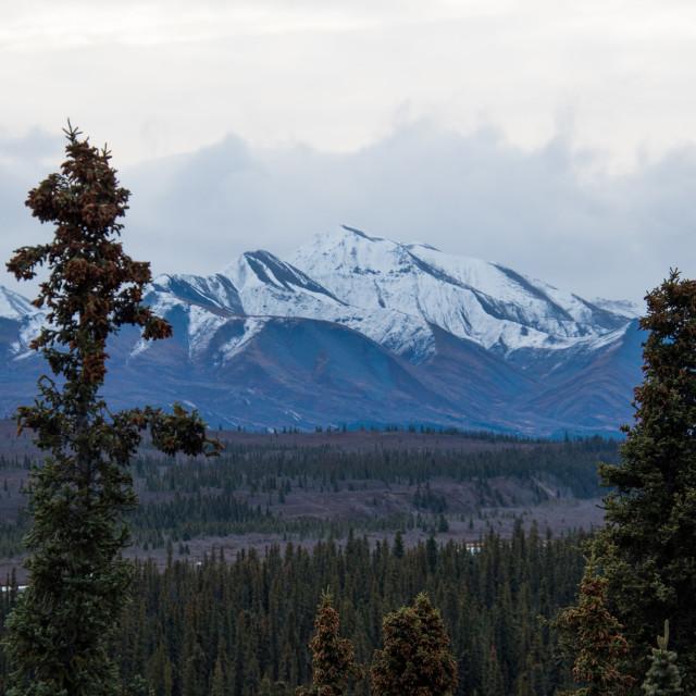 """Denali National Park"" stock image"