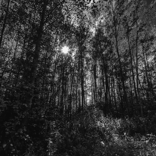 """Forest light"" stock image"