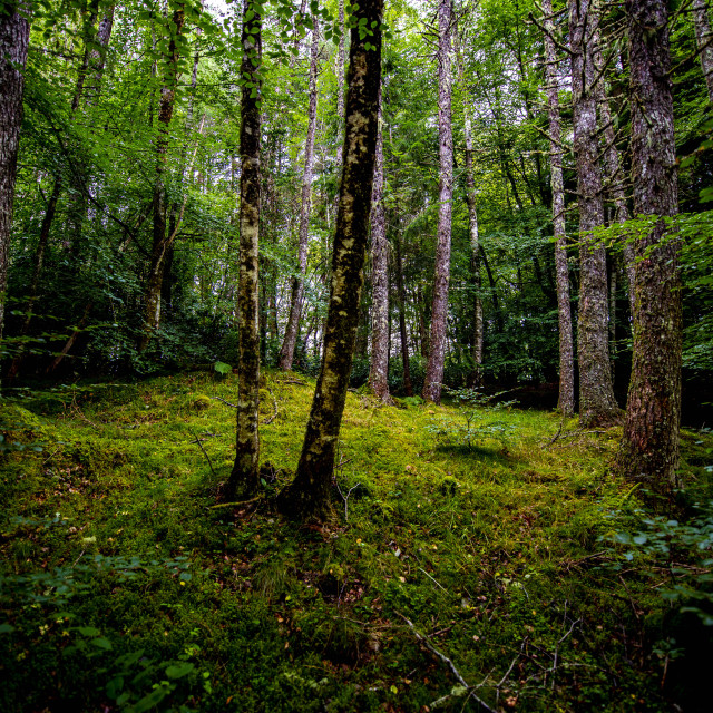 """""""Forest clearing"""" stock image"""