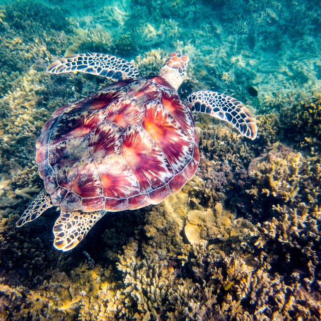 """Sea Turtle"" stock image"