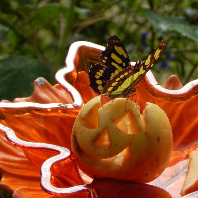 """""""Yellow Monarch Butterfly on Carved Fruit"""" stock image"""