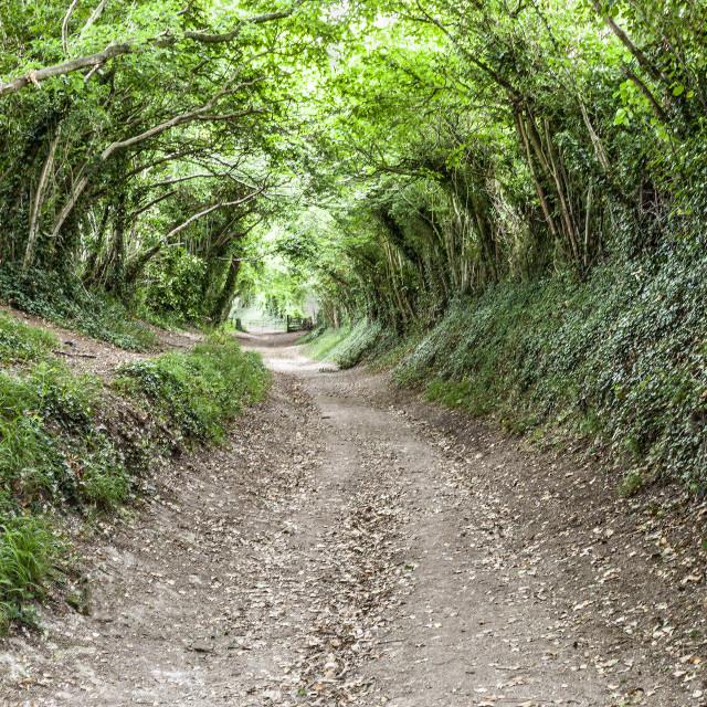 """Tree Tunnel"" stock image"