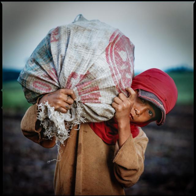 """Sugar Cane - Zuckerrohrplantage Negros Philippines"" stock image"
