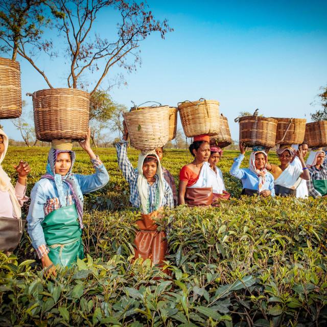 """Teeplantage"" stock image"