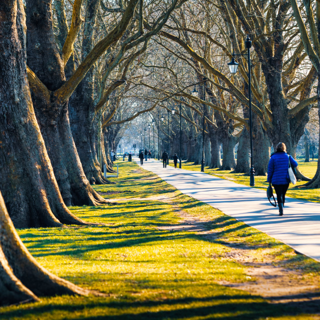 """""""An early morning walk from Jesus Green, Cambridge UK."""" stock image"""
