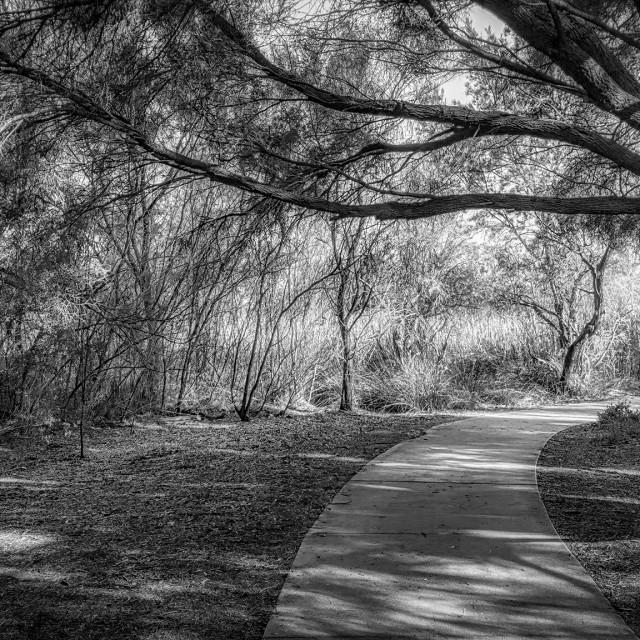 """""""Bushland Path"""" stock image"""