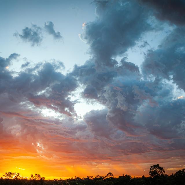 """""""Bush Sunset"""" stock image"""