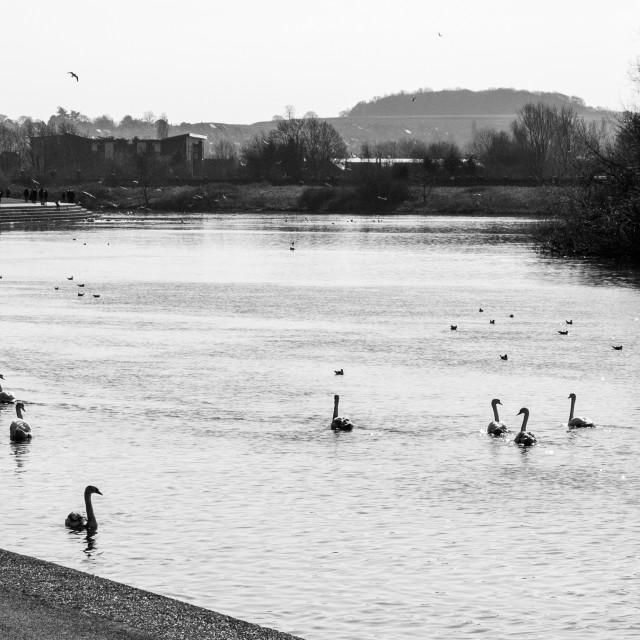 """River Trent"" stock image"
