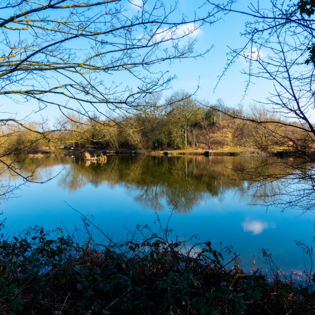 """Pond reflection"" stock image"