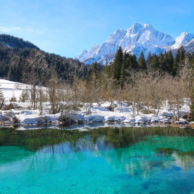 """Winter day at lake Zelenci"" stock image"