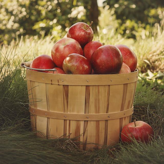 """Basket of Apples"" stock image"
