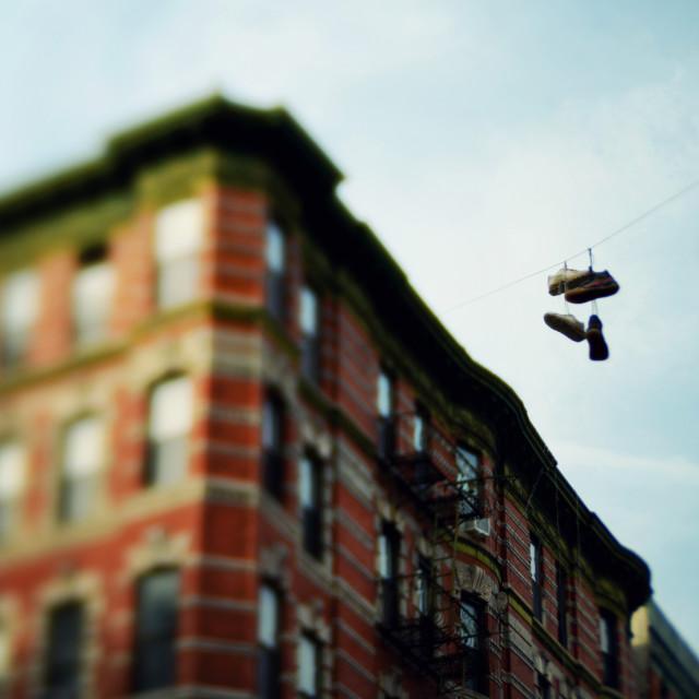 """New York City Salugi"" stock image"