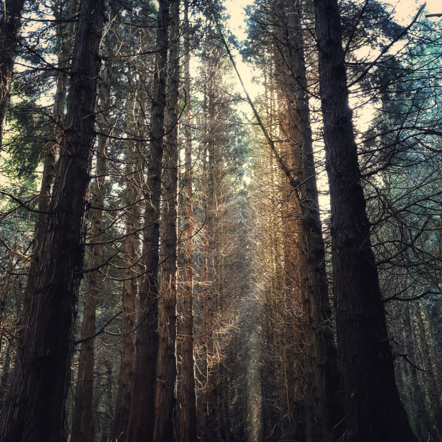 """""""Sun rays in the woods"""" stock image"""