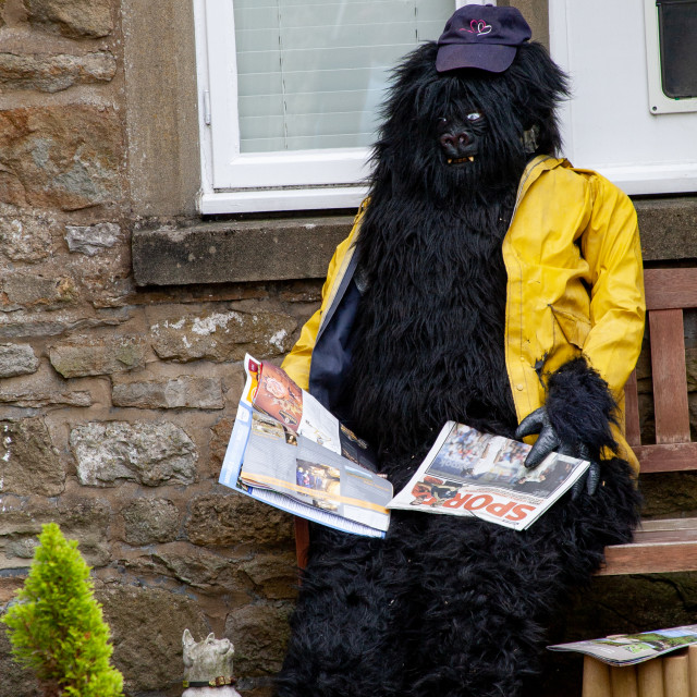 """""""Kettlewell Scarecrow Festival and Trail, Gorilla in Yellow Jacket. Yorkshire Dales, England."""" stock image"""