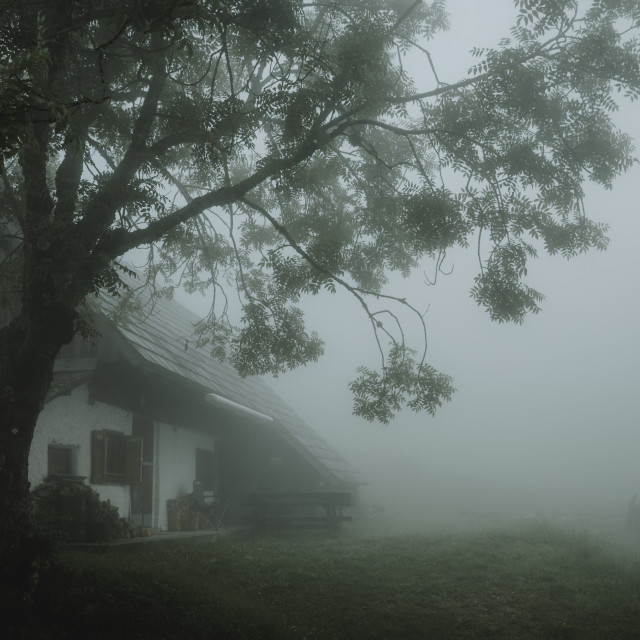 """Old chalet under the big old tree in fog"" stock image"