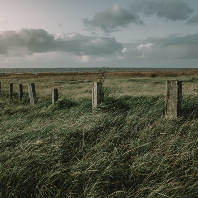 """The row of old wooden poles in grass on the west coast of the Denmark during the autumn twilight"" stock image"