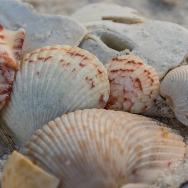 """Salt water and Seashells heal everything"" stock image"
