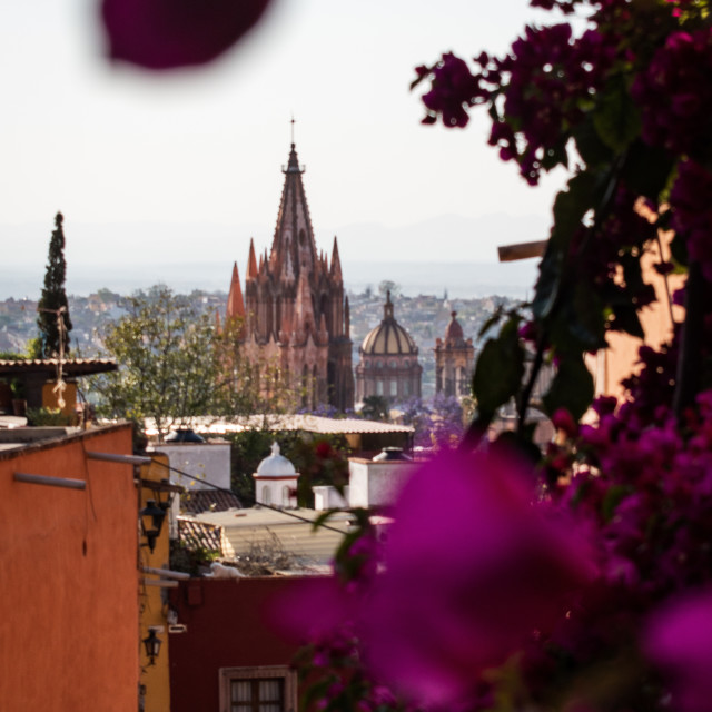 """San Miguel de Allende's Cathedral Framed by Flowers"" stock image"