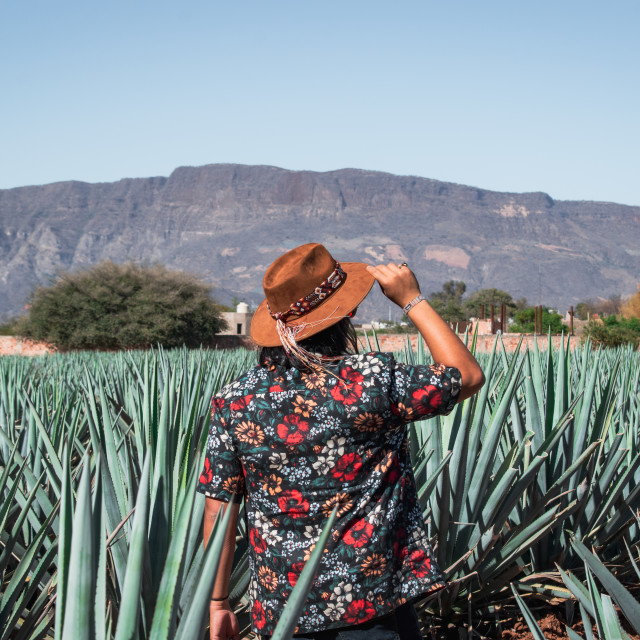"""Walking Through Agave Fields in Tequila, Mexico"" stock image"