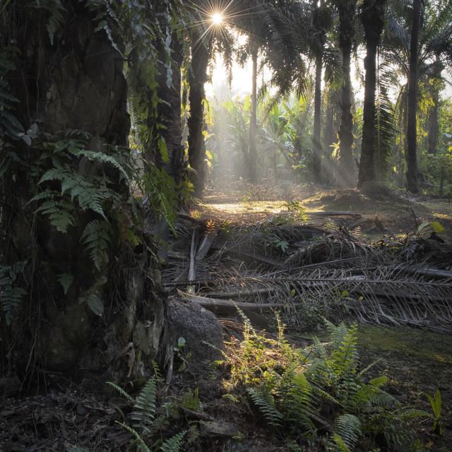 """early morning sun beam"" stock image"