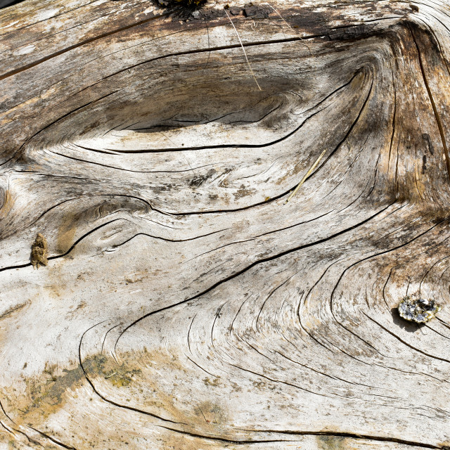 """""""Experienced Wood #10"""" stock image"""