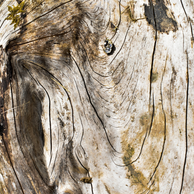 """""""Experienced Wood #11"""" stock image"""