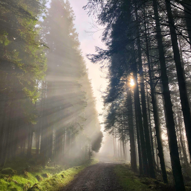 """""""Beautiful sunrays in Belmore Forest"""" stock image"""