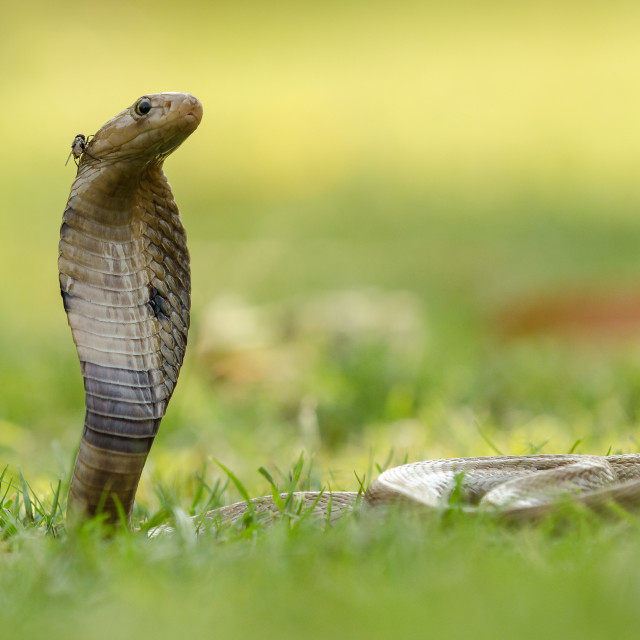 """Fly on a Snake"" stock image"