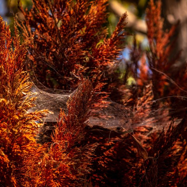 """Silk pattern in glowing amber sunlight 2"" stock image"