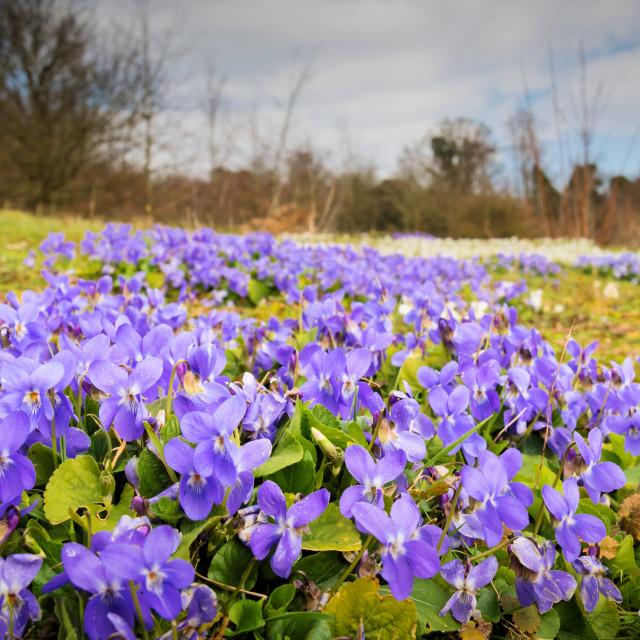 """""""Wild Flowers"""" stock image"""