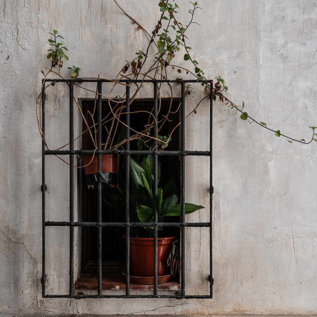 """""""Overgrown plant in the window"""" stock image"""