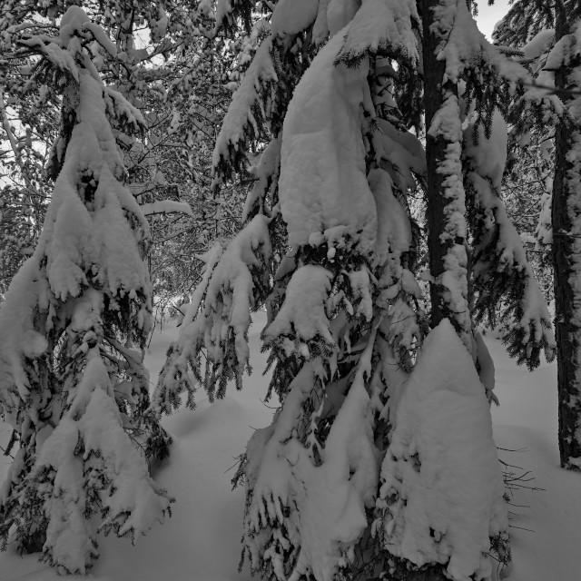 """""""Metsän neito"""" stock image"""