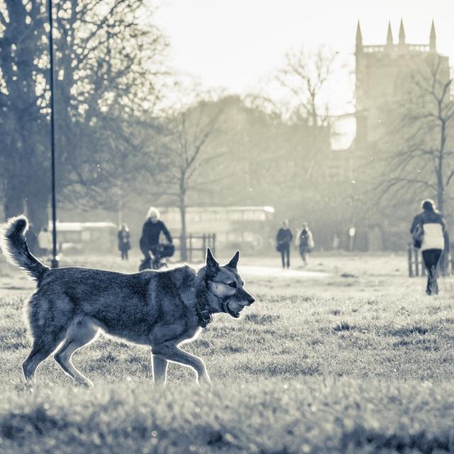 """""""Jesus Green black and white sunset, Cambridge UK."""" stock image"""