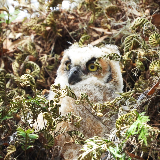 """""""Baby Owl in a Tree"""" stock image"""