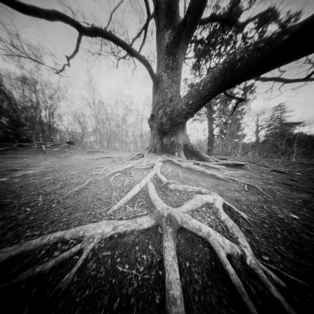 """Rooted - Pinhole photo"" stock image"