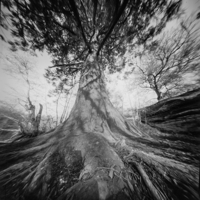 """Queen of the forest - Pinhole photo"" stock image"
