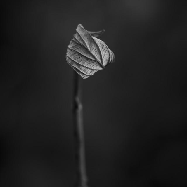 """Single Plant Leaf"" stock image"
