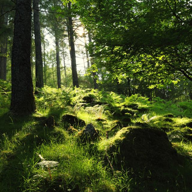 """Lakedistrict Woodlands"" stock image"