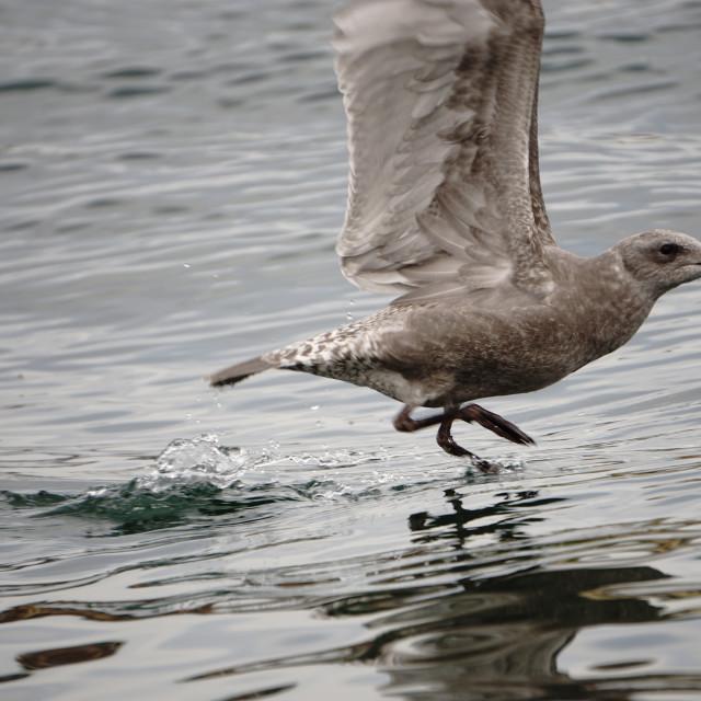 """Water Bird Run"" stock image"