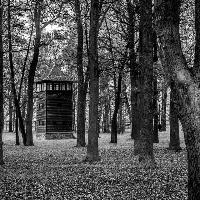 """""""Auschwitz - Birkenau (Auschwitz 2) Death Camp Forest Watchtower"""" stock image"""