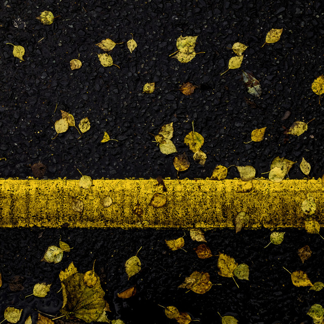 """""""Autumn leaves on road with yellow line"""" stock image"""