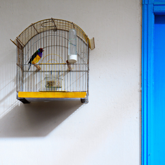 """""""a bird in a cage"""" stock image"""