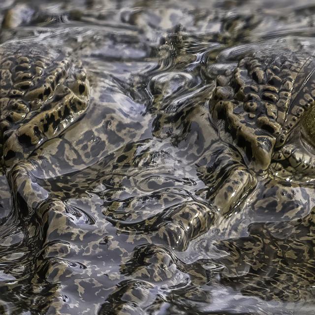 """Staring at the crocodile's eyes"" stock image"