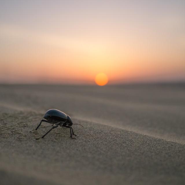 """Beetle at dawn"" stock image"