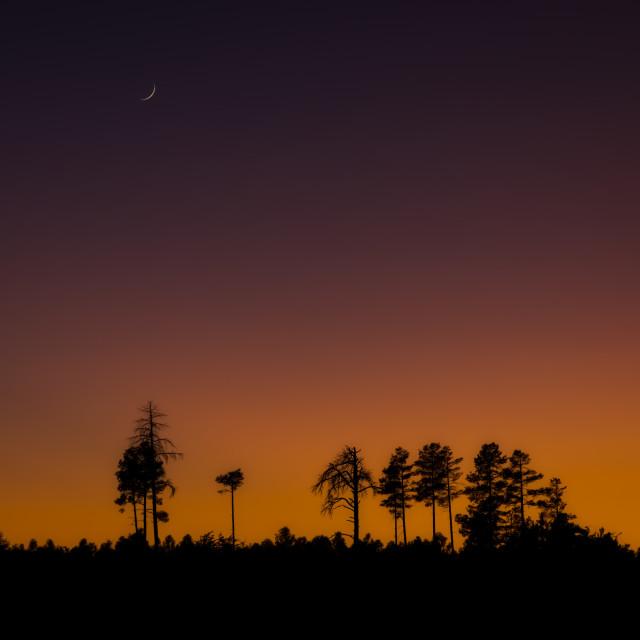 """sunset-arizona-silhouette-trees"" stock image"