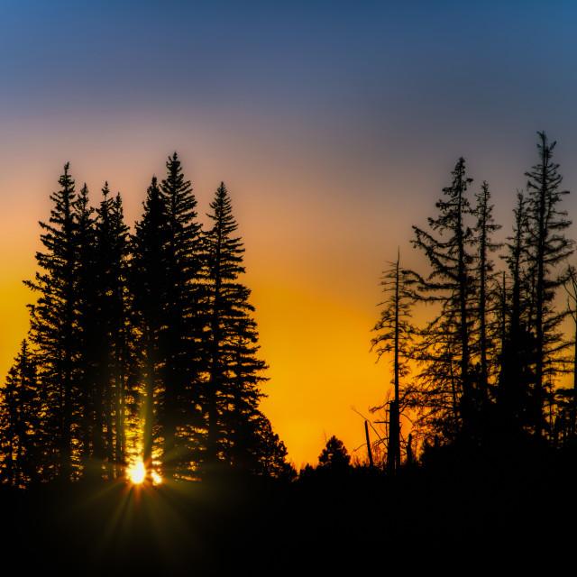 """""""white mountains-arizona-sunrise-national forest"""" stock image"""